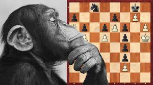 Gorilla Playing Chess - Jiu Jitsu Principles